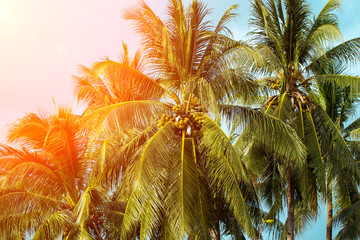 Coco palm tree in orange light. Tropical landscape with palms