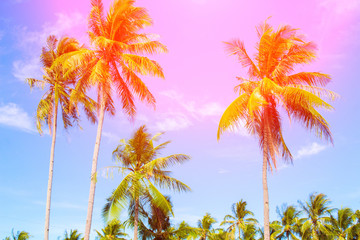 Tropical landscape with palms. Palm tree crown on blue sky. Sunny tropical island toned photo