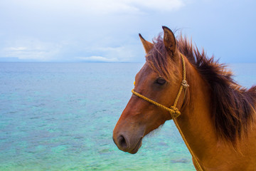 Horse and seaview. Travel photo. Brown horse head closeup. Lovely farm animal.