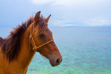 Horse and sea summer vacation photo. Brown horse head closeup. Lovely farm animal.
