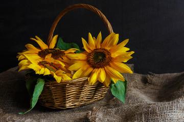 Bouquet of sunflower flowers on a dark background in vintage retro style