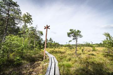 Long wooden nature trail going through a bog