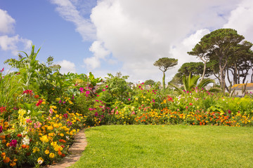 Flowers in a garden in Cornwall at summertime