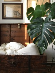 philodendron monstera coy hygge home bedding blanket golden hour