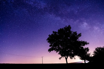 Milky way and the stars over a tree