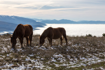 Two horses pasturing on top of a mountain over a sea of fog, with golden light and some distant and misty mountains on the background