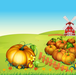 Farm scene with pumpkin garden