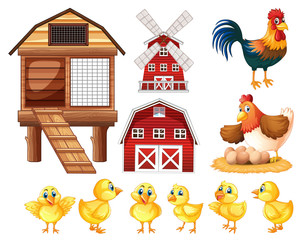 Chickens and cicken coops