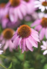 Beautiful flower in a city garden