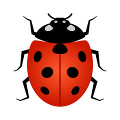 Coccinellidae Ladybug or ladybird beetle insect line art vector icon for wildlife apps and websites