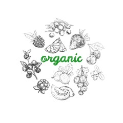 Organic food concept 2