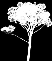 white pine high single silhouette isolated on black