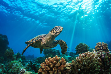 Underwater coral reef and wildlife with sea turtles