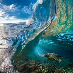Żółw morski pod falą oceanu