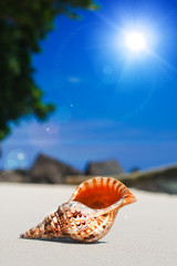 beautiful seashell on sand beach under sunlight