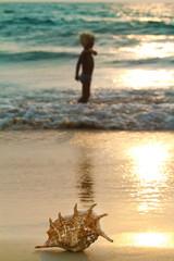 A sea shell on wet beach sand