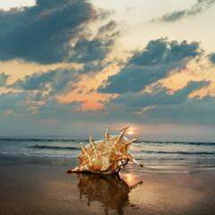 Tropical ocean paradise design template.Sandy beach with seashell near shorebreak