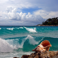 A Tropical Pacific oceanview beach with seashell and breaking waves