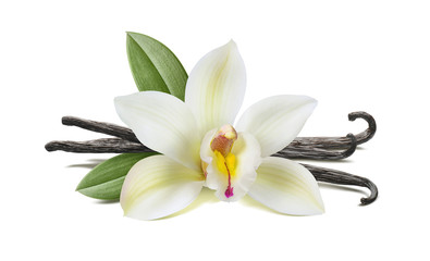 Vanilla flower, pods, leaves isolated on white