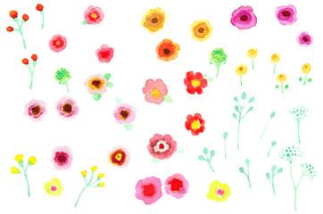 色々な花々 Various flowers