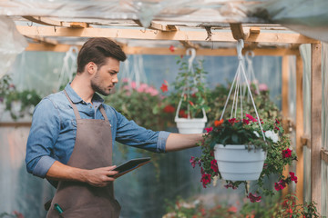 side view of gardener in apron using tablet while checking plants in greenhouse