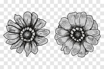Vector sketch of flowers. Illustration on a transparent background