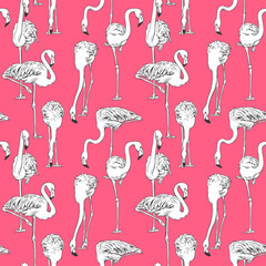 Seamless pattern with image of Flamingo on a pink background. Vector illustration.