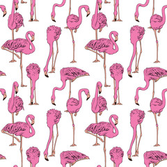 Seamless pattern with image of a pink Flamingo on a white background. Vector illustration.