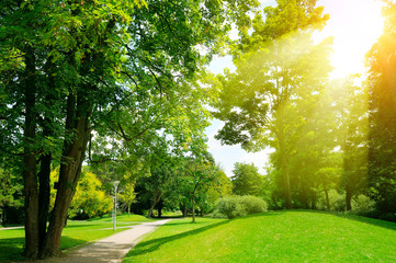 Bright sunny day in park. Sun rays illuminate green grass and trees.