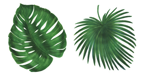 Watercolor painting tropical leaves set