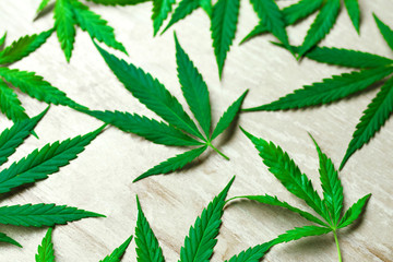 Cannabis Leaf. Hemp is a common name for Cannabis sativa and the name most used when this annual plant is grown for non-drug purposes. These include the industrial purposes
