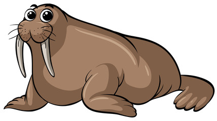 Walrus with happy face on white background