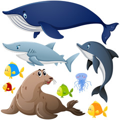 Different types of sea animals