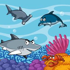 Wild sharks under the sea