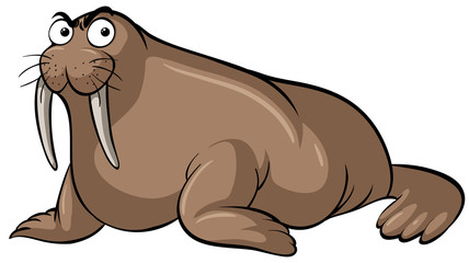 Walrus with serious face on white background