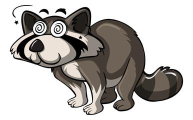 Raccoon with dizzy eyes