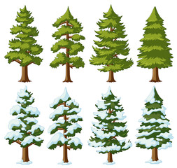 Different shapes of pine trees