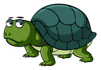 Sad turtle on white background