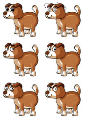 Brown dog with different facial emotions