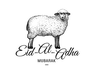 Eid-al-adha greeting card template with hand drawn sheep isolated on white background. Vector illustration for muslim festival of sacrifice design