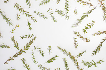 Frame with branches, leaves and petals isolated on white background. Flat lay, top view. Arradgement of gray grefsheim (spiraea cinerea) plant.