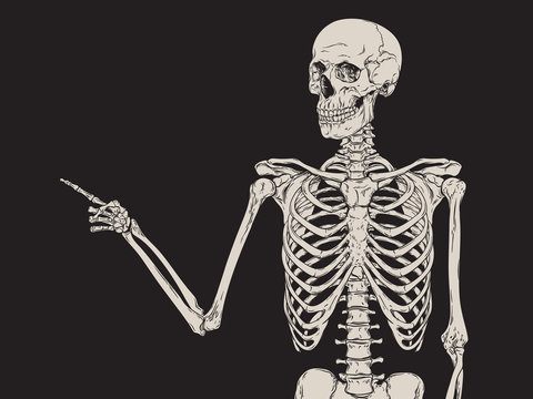 Human skeleton finger pointing isolated over black background vector
