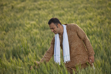 Indian farmer in wheat field