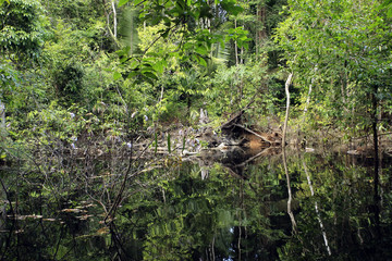 Flooded Area in the Amazon Rainforest, Brazil