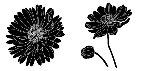 Graphical black daisy flower illustration. Vector illustration.