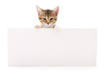 Wall Mural - Kitten with blank