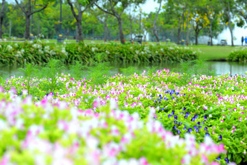 beautiful spring flowers in garden nature background