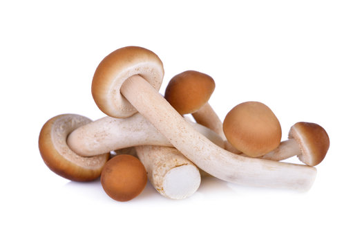 Yanagi-matsutake mushroom on white background