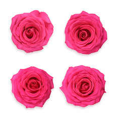 Single pink rose flower set