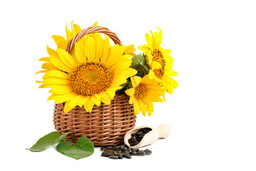 Sunflowers in a basket and sunflower seeds on a white background.